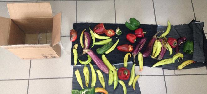 Οι πιπεριές ήταν «γεμιστές» – Συνελήφθη 55χρονος που έκρυβε στα λαχανικά ηρωίνη