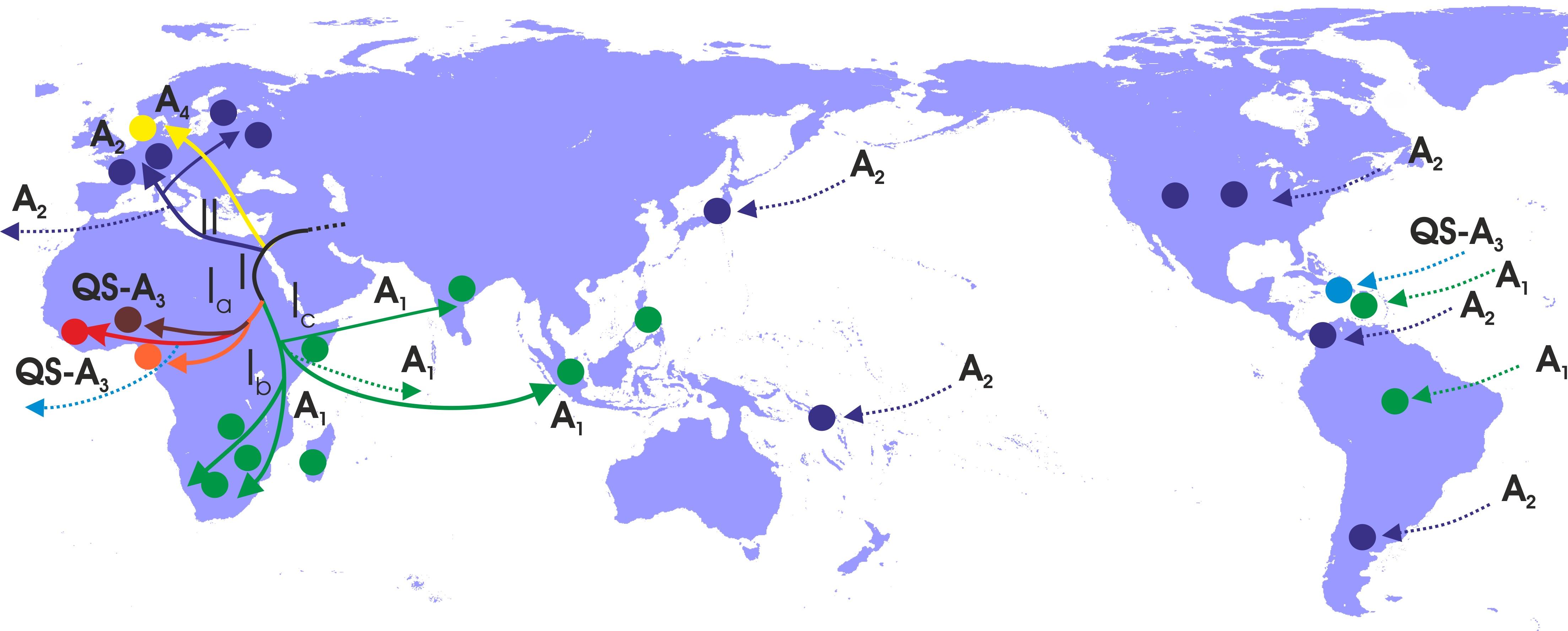 Χαρτογράφηση γεωγραφικής διασποράς γονότυπου HBV-A. Οι διαφορετικοί τύποι (υπογονότυποι) του HBV-Α και μονοπάτια διασποράς αναπαρίστανται με διαφορετικά χρώματα.  Οι χρωματισμένοι κύκλοι αντιστοιχούν στις γεωγραφικές περιοχές που οι αντίστοιχοι υπογόνοτυποι παρουσιάζουν υψηλά ποσοστά. Με διακεκομμένες γραμμές αναπαρίστανται η πρόσφατη διασπορά του HBV-A λόγω ανθρώπινων μετακινήσεων και του δουλεμπορίου