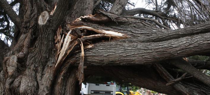 Βλάβες στην ηλεκτροδότηση λόγω πτώσης δέντρων σε καλώδια -Χωρίς ρεύμα ο Γέρακας