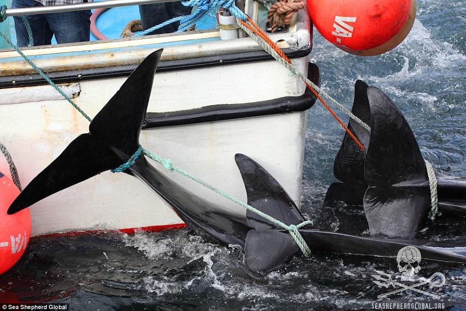 Σοκαριστικές Εικόνες!! Σφαγή φαλαινών στα Νησιά Φερόε [Photos][Video]