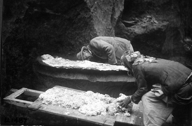 Σκελετός που επιβίωσε από βιβλική καταστροφή βρέθηκε σε υπόγειο μουσείου στις ΗΠΑ