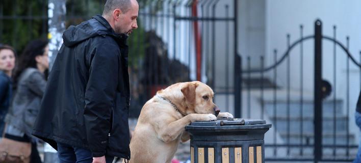 Αστυνομικός σκύλος, φωτογραφία: ΜΟΤΙΟΝΤΕΑΜ/ΤΡΥΨΑΝΗ ΦΑΝΗ