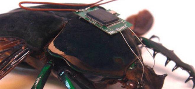 Το πρώτο τηλεκατευθυνόμενο κυβερνο-σκαθάρι είναι πραγματικότητα (βίντεο)