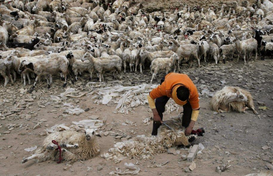 Reuters: Φρικτές φωτογραφίες από τις κτηνοτροφικές μονάδες στην Κίνα που σφίγγουν το στομάχι [εικόνες]