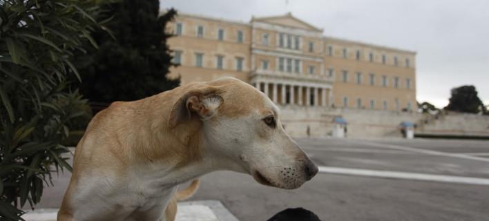 Μετά τις αντιδράσεις η κυβέρνηση αποσύρει το νομοσχέδιο για τα ζώα