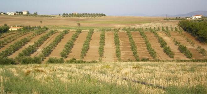 Γλύτωσαν οριστικά τη φορολόγηση αγροτεμαχίων οι κατ' επάγγελμα αγρότες