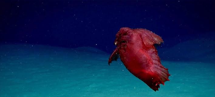 Το «ακέφαλο κοτόπουλο τέρας» θεάθηκε στα νερά του Νότιου Ωκεανού