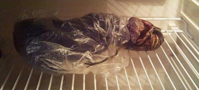Ρωσία, γυναίκα, ufo, εξωγήινος, ψυγείο