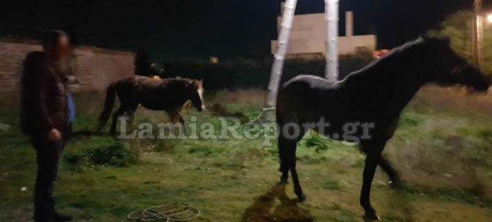 Λαμία: Κυνηγούσαν... άλογα μέσα στην πόλη!