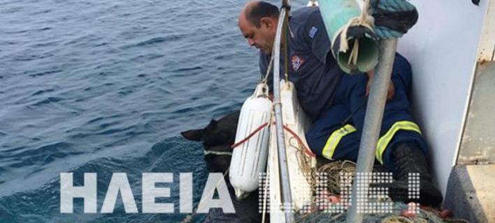 Επιχείρησης διάσωσης αλόγου στην Ηλεία/ Φωτογραφία:ilialive.gr