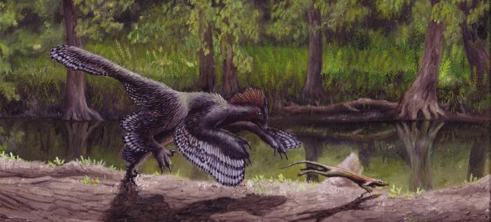Λύθηκε το μυστήριο: Γι'΄αυτό δεν πετούσε ο «φτερωτός δεινόσαυρος» αγχιόρνις
