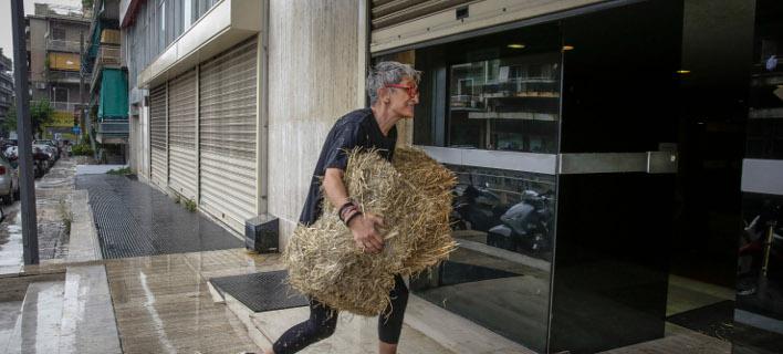 Πέταξαν σανό στα γραφεία των ΑΝΕΛ/Φωτογραφία: Eurokinissi