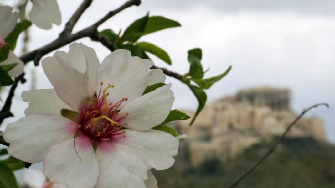 Ανοιξη στην Αθήνα - Φωτογραφία: EUROKINISSI/ΓΙΩΡΓΟΣ ΚΟΝΤΑΡΙΝΗΣ