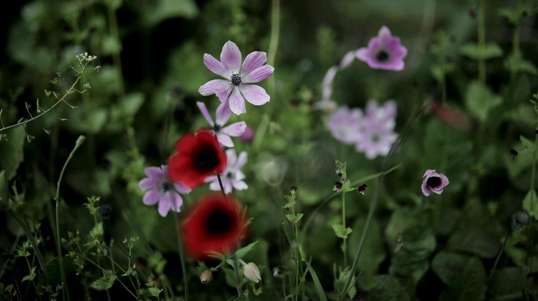 Ανάσταση της Φύσης -Φωτογραφία: Intimenews/ΤΟΣΙΔΗΣ ΔΗΜΗΤΡΗΣ