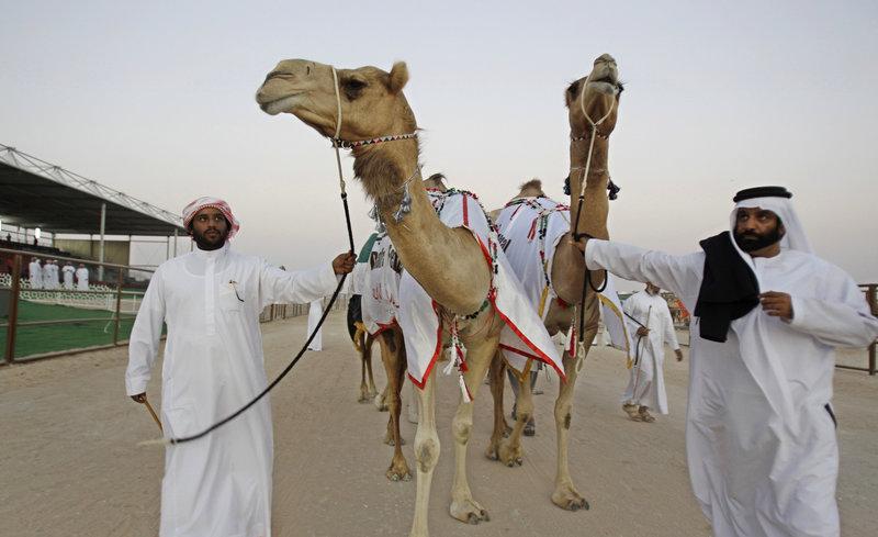 Απέκλεισαν 12 καμήλες από διαγωνισμό ομορφιάς -Επειδή... είχαν κάνει μπότοξ! (εικόνες)