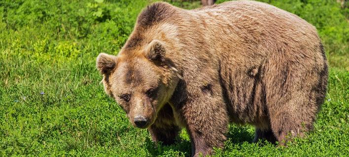 Συναγερμός στην Καστοριά -Δυο αρκούδες έκοβαν βόλτες επί 3,5 ώρες μέσα στην πόλη