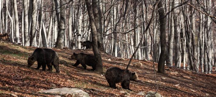 φωτογραφίες: Κ. Τσακαλίδης/Αρκτούρος
