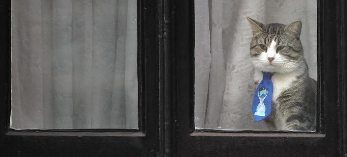 Η γάτα του Ασάνζ, στο παράθυρο της πρεσβείας/ Φωτογραφία: AP- Frank Augstein