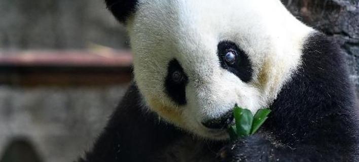 Πέθανε στα 37 της χρόνια η διάσημη Μπάσι, φωτογραφία: xinhuanet.com