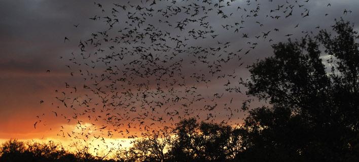 Μαζική έξοδο νυχτερίδων από τη σπηλιά στο Τέξας (Φωτογραφία: AP/ Eric Gay)