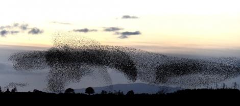 Χιλιάδες πουλιά κάνουν απίθανους σχηματισμούς στον ουρανό