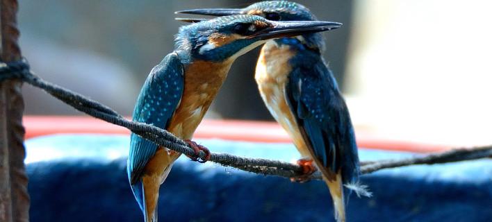 Χρωματιστά και διαφορετικά, τα πουλιά της Θεσσαλονίκης [εικόνες]