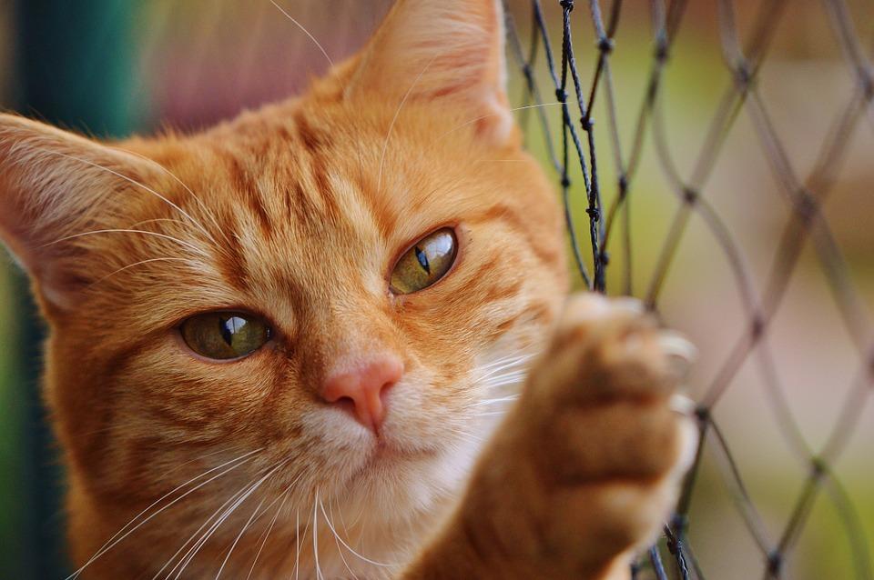 Γάτες και σκύλοι, φίλοι και συντροφιά πολλών ανθρώπων που τους συνοδεύουν ακόμη και στις διακοπές τους