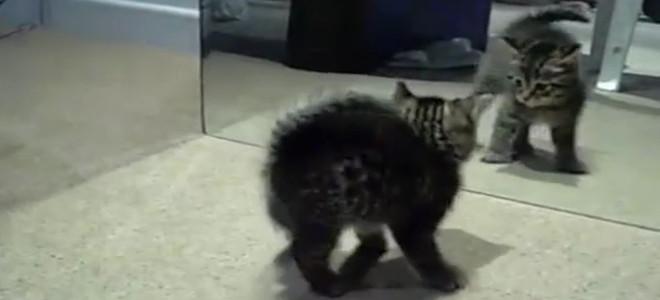 Πώς αντιδρούν τα ζώα στον καθρέφτη: Ενα πείραμα για τη συνείδηση στο ζωικό βασίλ