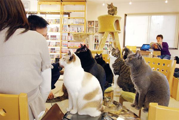 Καφετέρια για γάτες άνοιξε στο Παρίσι: Απολαύστε Γαλλικό καφέ με τους χνουδωτούς σας φίλους