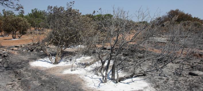 Η επόμενη ημέρα στη Χίο: Πάνω από 35.000 μαστιχόδεντρα έγιναν στάχτη [εικόνες]