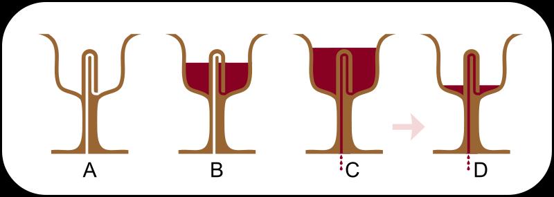 Tι είναι η έξυπνη κούπα του φιλοσόφου Πυθαγόρα και πώς πρέπει να πίνουμε το κρασί [εικόνες] | iefimerida.gr 4