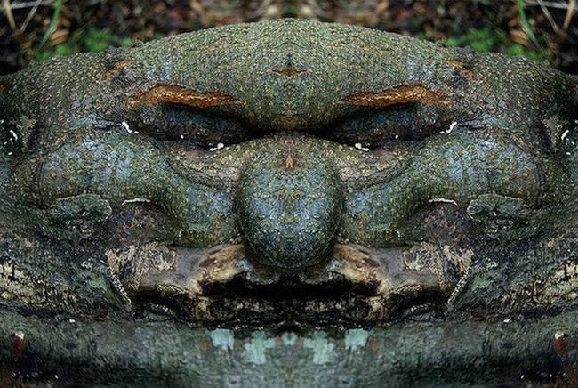 Eνα σκοτεινό άλμπουμ: Οταν τα δέντρα θυμίζουν τρομακτικό ανθρώπινο πρόσωπο