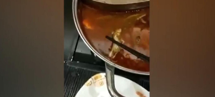 Το βίντεο με τον νεκρό αρουραίο έγινε viral. Φωτογραφία: YouTube