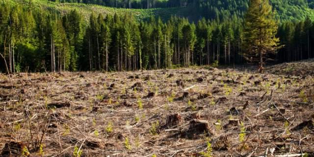 Η Γη εκπέμπει SOS: Βιώνουμε περίοδο μαζικής εξαφάνισης ειδών