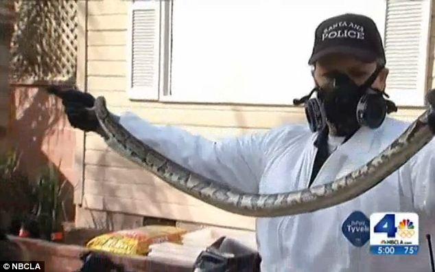 φωτογραφίες Φρίκη Σπίτι νεκρά φίδια βίντεο