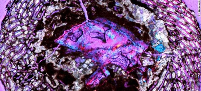 Τα αρχαιότερα έμβρυα σε αυγά δεινοσαύρων ανακαλύφθηκαν στη Νότια Κίνα
