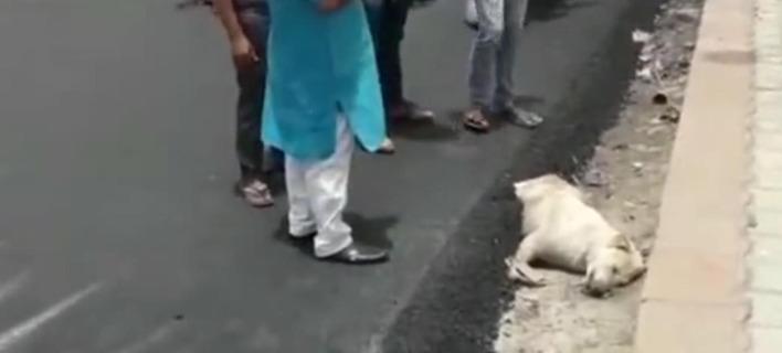Φρίκη: Ασφαλτόστρωσαν σκύλο που κοιμόταν στην άκρη του δρόμου [εικόνες & βίντεο]
