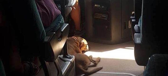Οδηγός KTΕΛ στη Σκιάθο παίρνει μαζί του αδέσποτο σκύλο για να μην υποφέρει από τον καύσωνα [εικόνα]