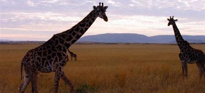 Κάποτε η Δράμα έμοιαζε με την Αφρική -Ζούσαν ρινόκεροι, καμηλοπαρδάλεις, γαζέλες