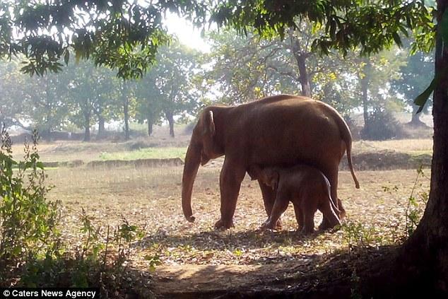 ελέφαντας Εικόνες Βίντεο