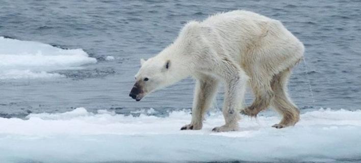 Η «κοκαλιάρα» αρκούδα του Kerstin Langenberger/Getty Images σόκαρε την κοινή γνώμη