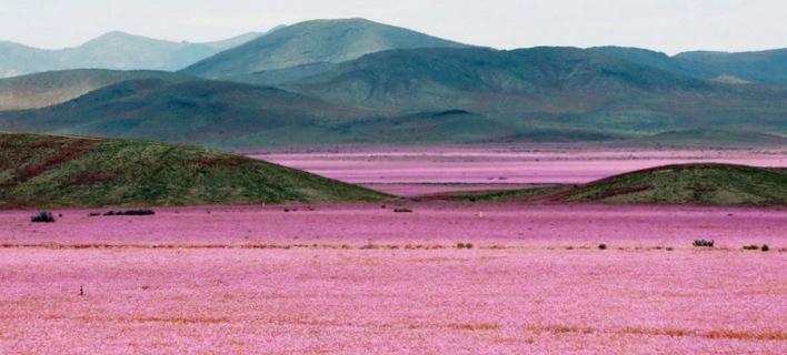 Πώς το Ελ Νίνιο έκανε χρωματιστό το πιο ξηρό μέρος του πλανήτη [εικόνες]