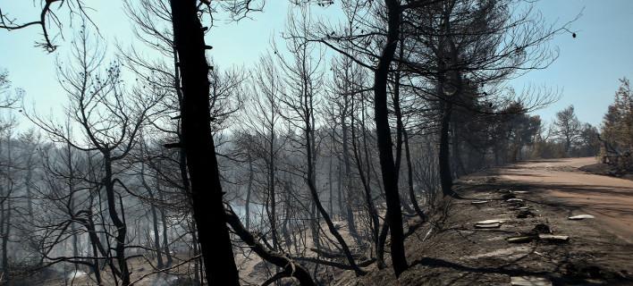 Φωτιά Εύβοια/ Φωτογραφία intime news