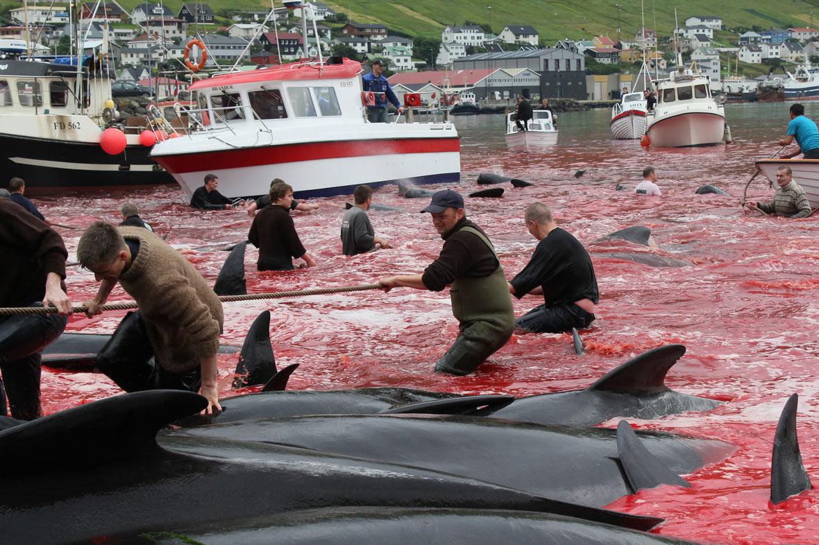 Αποτέλεσμα εικόνας για φαλαινοθηρία