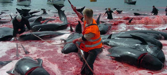 Ιαπωνία: Ξεκινά ξανά η θηριωδία με το κυνήγι των φαλαινών [εικόνες]