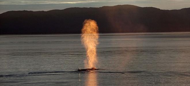 Απίστευτο – Φάλαινα εκτοξεύει από το φυσητήρα της... φωτιά [εικόνες]