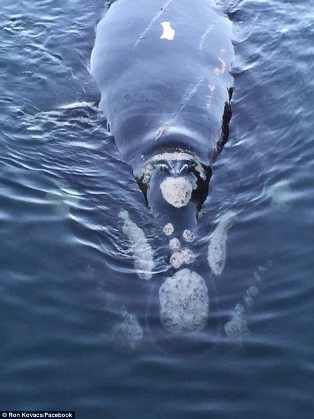 Τεράστια φάλαινα πλησιάζει ψαράδες για να τη βοηθήσουν – Ενθουσιασμένοι βγάζουν selfies (Εικόνες, Βίντεο)