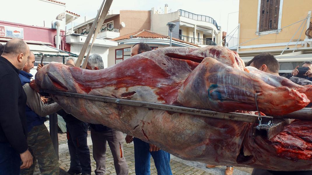 Με το σούβλισμα ενός μόσχου, βάρους 295 κιλών, θα αποχαιρετίσουν το 2017 οι κάτοικοι των Φερών Έβρου -Φωτογραφία: ΑΠΕ-ΜΠΕ/STR