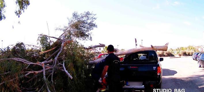 Δέντρο έπεσε σε αυτοκίνητο στο Ναύπλιο /Φωτογραφία Αργολικές ειδήσεις