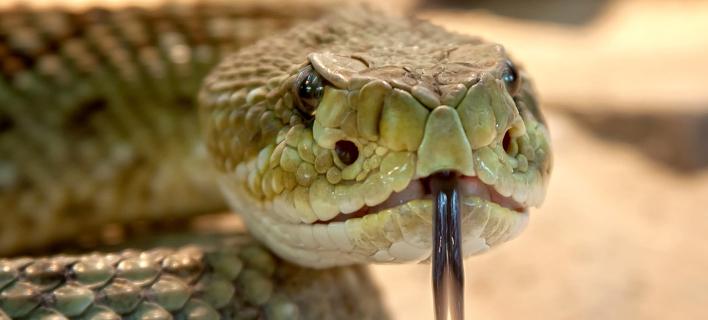 Φίδι (Φωτογραφία: Pixabay)